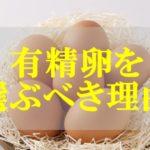 有精卵と無精卵の違い【有精卵をおすすめする理由】