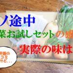 坂ノ途中「野菜お試しセット」の感想!【坂ノ途中ってどんな会社?】