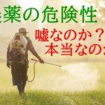 農薬の危険性は嘘?本当?【なぜ、無農薬が危険だと言われるのか?】