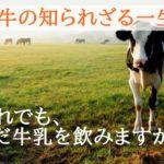 乳牛の知られざる一生【私たちにできることは何か?】