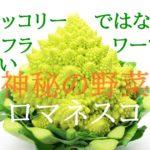 「神秘の野菜」ロマネスコを知る!【栄養と味、おすすめの食べ方】
