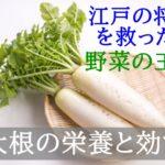 大根の栄養と効能効果!選び方は?【江戸時代、将軍を救った野菜!?】