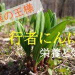 山菜の王様「行者にんにく」の栄養と効能【食べ過ぎには注意!?】