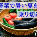 7月が旬の野菜【夏本番!夏バテ予防におすすめの栄養価の高い野菜3選!】