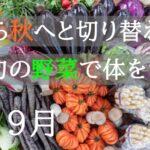 9月が旬の野菜【夏から秋へと切り替わる!カラダをつくる秋野菜3選!】