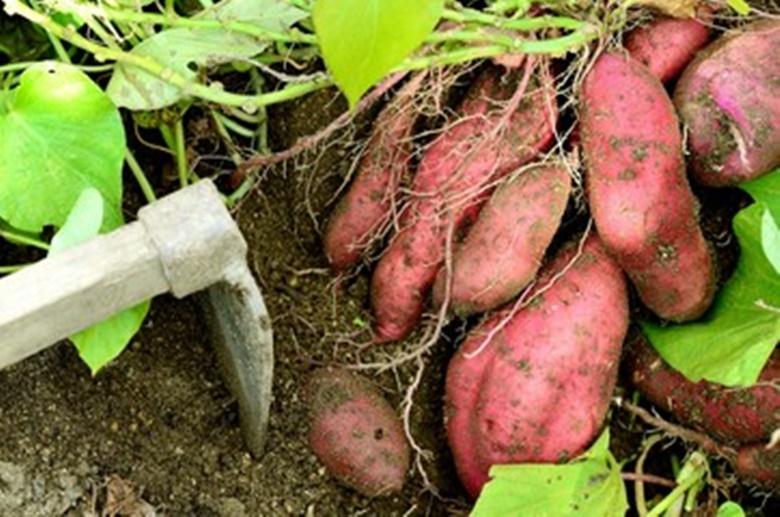 10月が旬の野菜